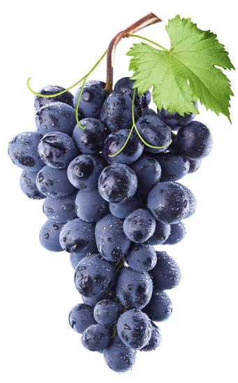Resultado de imagen para uva